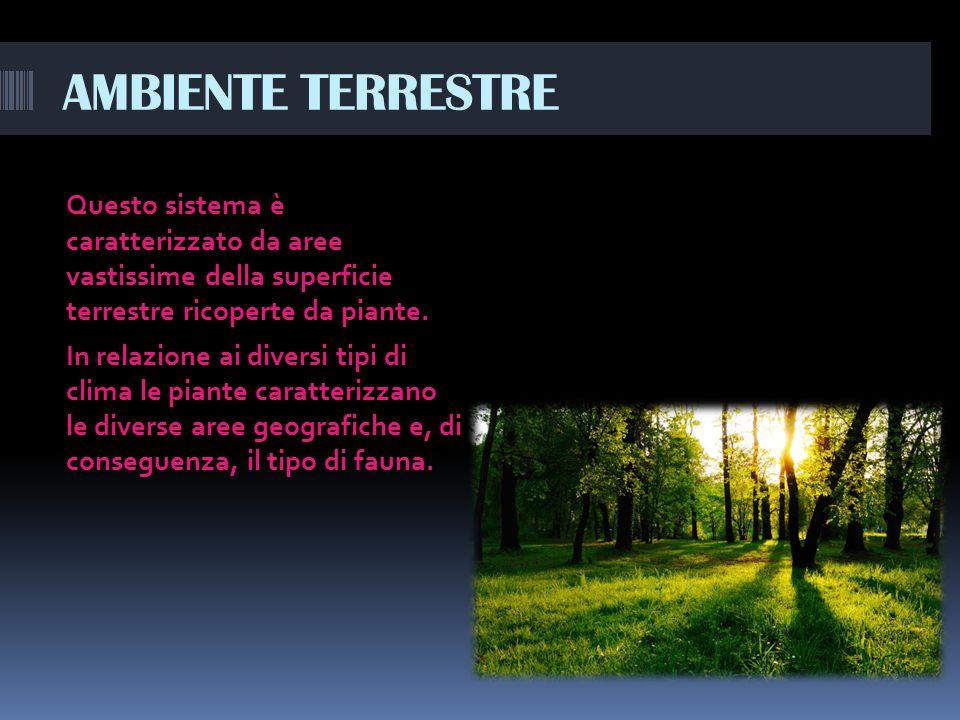 AMBIENTE TERRESTRE Questo sistema è caratterizzato da aree vastissime della superficie terrestre ricoperte da piante.