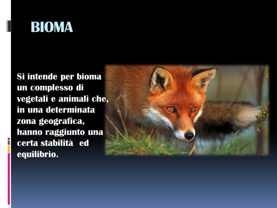 BIOMA Si intende per bioma un complesso di vegetali e animali che, in una determinata zona geografica, hanno raggiunto una certa stabilità ed equilibrio.