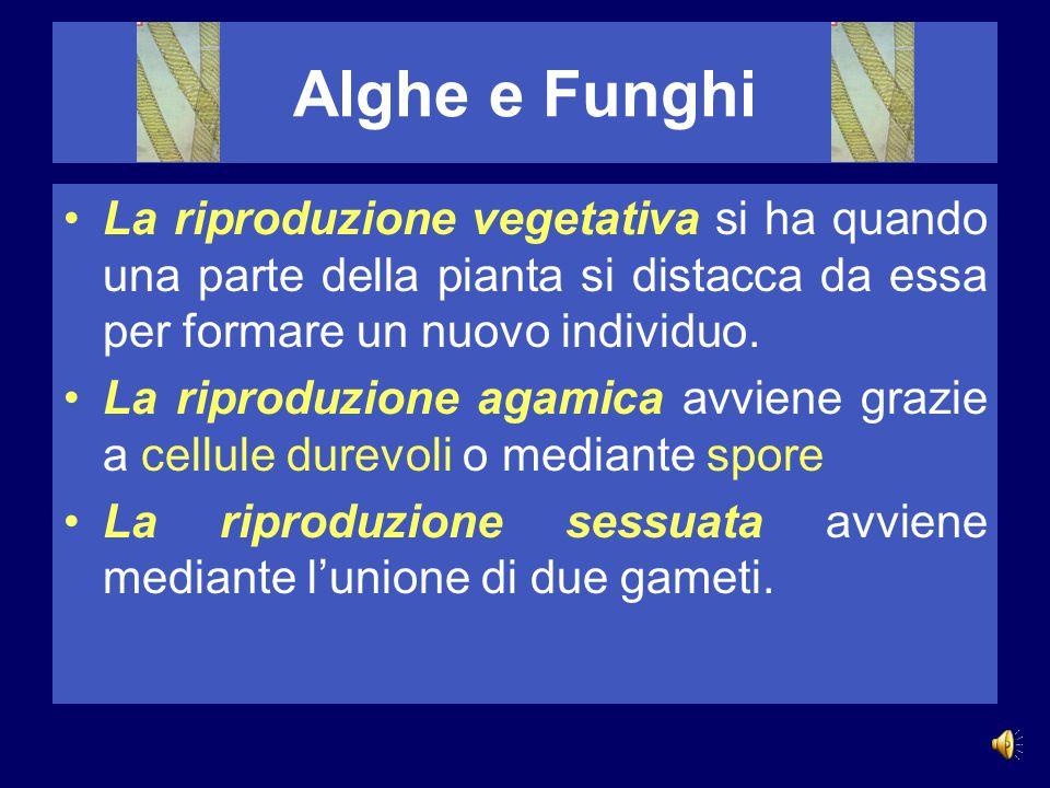 Alghe e Funghi Nelle alghe pluricellulari distinguiamo tre tipi principali di riproduzione: 1.Propagazione vegetativa (asessuale) 2.Riproduzione agami
