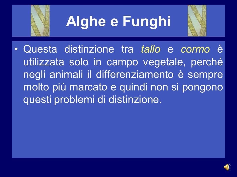Alghe e Funghi tallofiteAlghe e funghi sono tallofite, cioè vegetali privi di tessuti differenziati formanti veri organi. talloIl corpo delle tallofit
