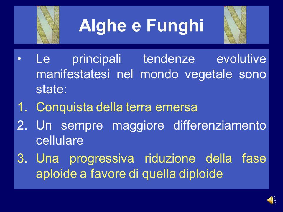 Alghe e Funghi Le principali tendenze evolutive manifestatesi nel mondo vegetale sono state: 1.Conquista della terra emersa 2.Un sempre maggiore differenziamento cellulare 3.Una progressiva riduzione della fase aploide a favore di quella diploide