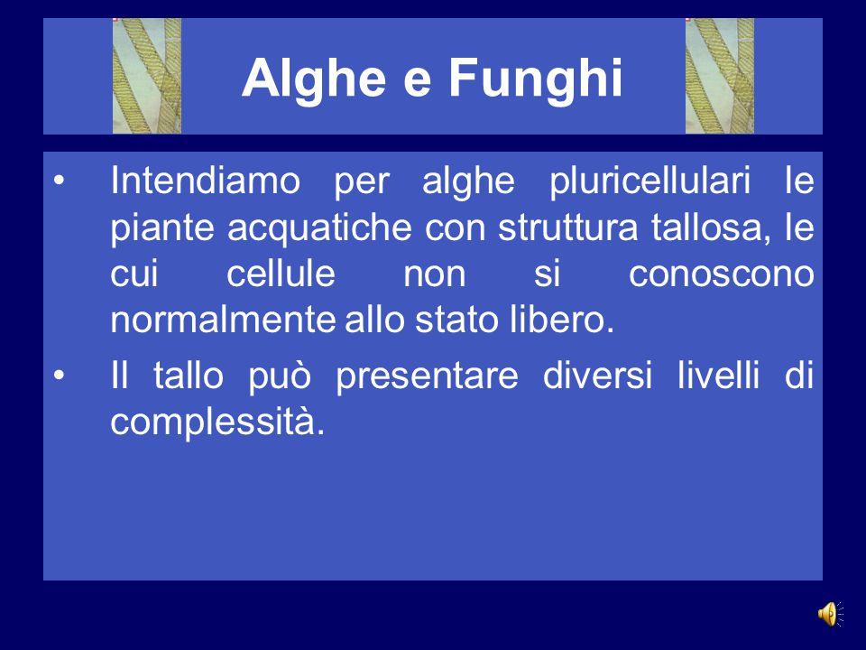 Alghe e Funghi Intendiamo per alghe pluricellulari le piante acquatiche con struttura tallosa, le cui cellule non si conoscono normalmente allo stato libero.