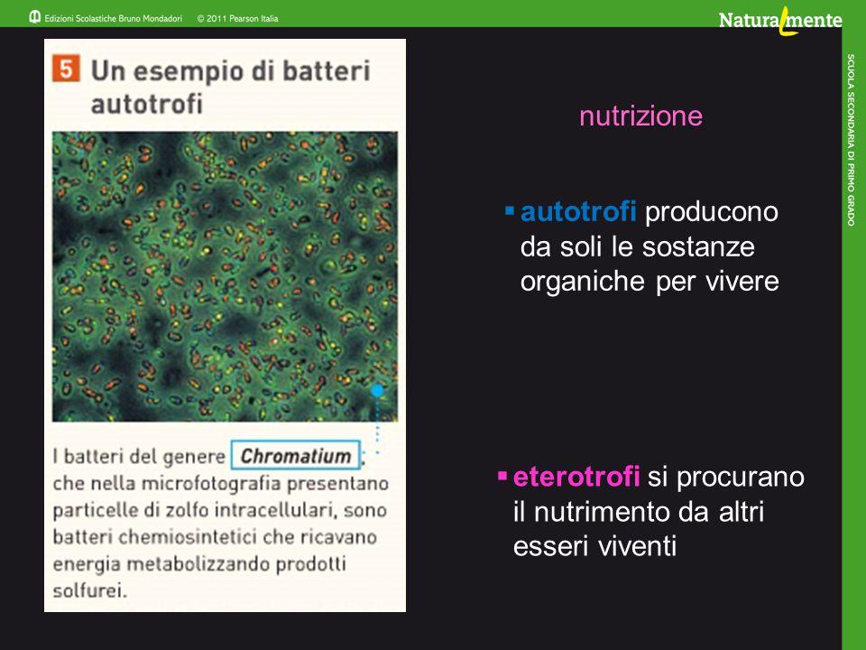  autotrofi producono da soli le sostanze organiche per vivere  eterotrofi si procurano il nutrimento da altri esseri viventi nutrizione