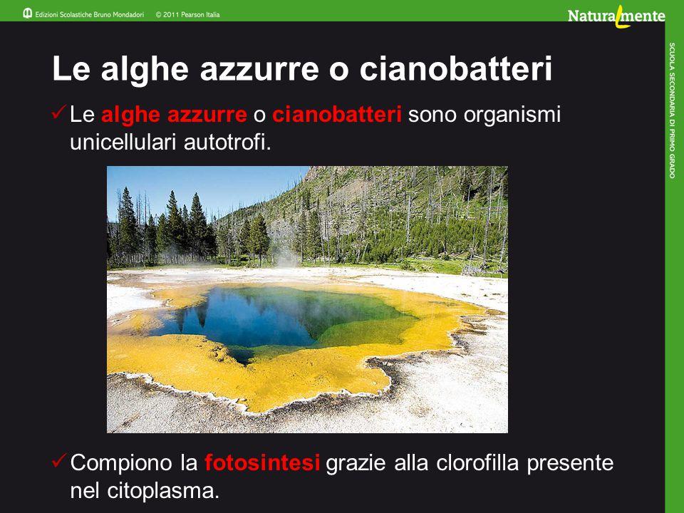 Le alghe azzurre o cianobatteri sono organismi unicellulari autotrofi. Le alghe azzurre o cianobatteri Compiono la fotosintesi grazie alla clorofilla