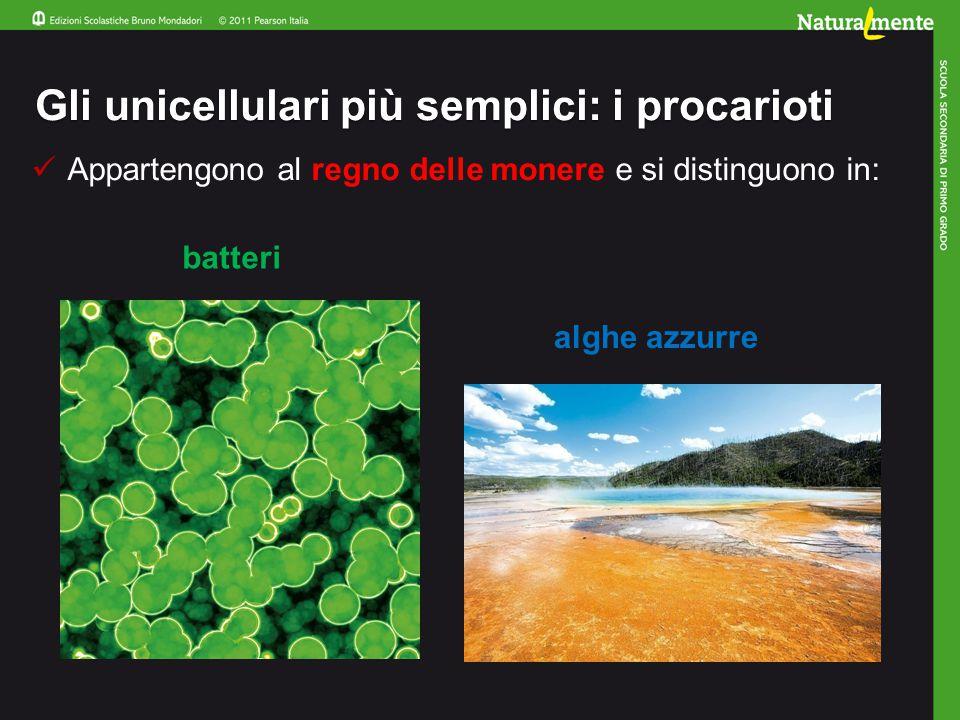 Gli unicellulari più semplici: i procarioti Appartengono al regno delle monere e si distinguono in: batteri alghe azzurre