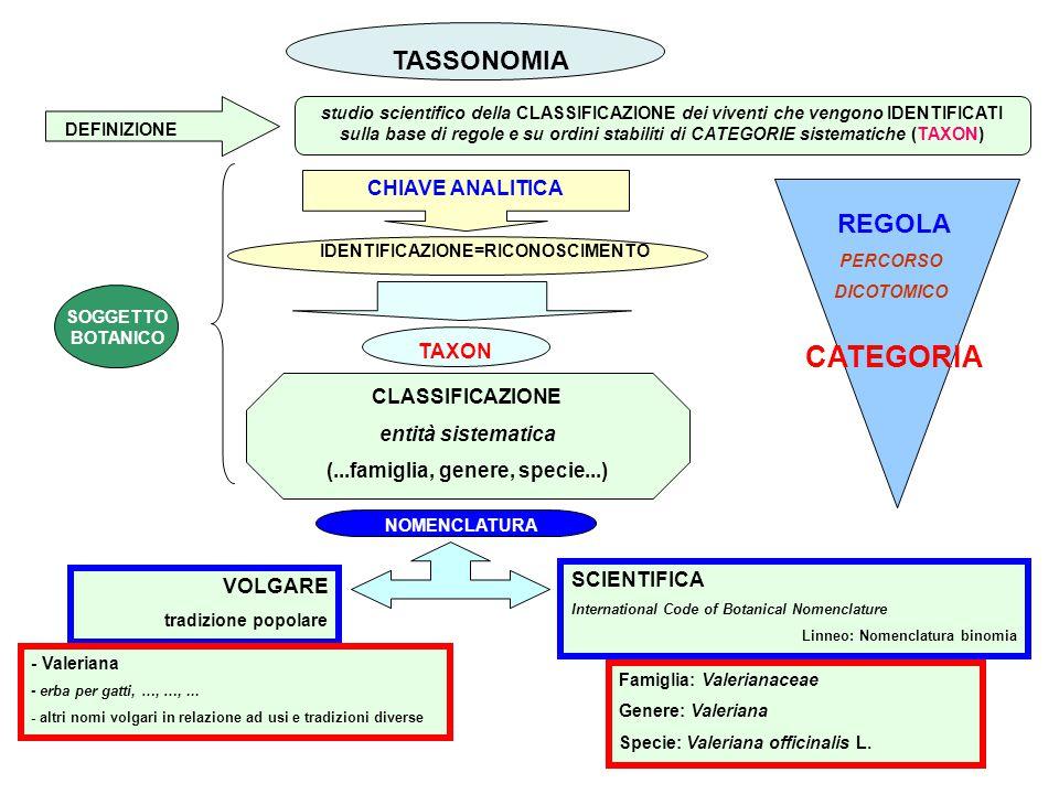 TASSONOMIA studio scientifico della CLASSIFICAZIONE dei viventi che vengono IDENTIFICATI sulla base di regole e su ordini stabiliti di CATEGORIE siste