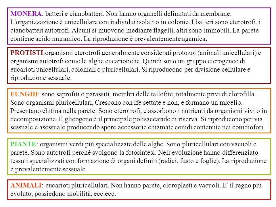 MONERA: batteri e cianobatteri. Non hanno organelli delimitati da membrane. L ' organizzazione è unicellulare con individui isolati o in colonie. I ba