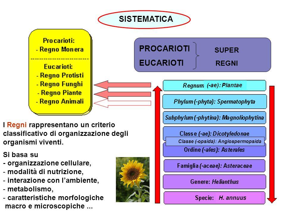 H. annuus SISTEMATICA PROCARIOTI EUCARIOTI SUPER REGNI (-ae): Plantae I Regni rappresentano un criterio classificativo di organizzazione degli organis