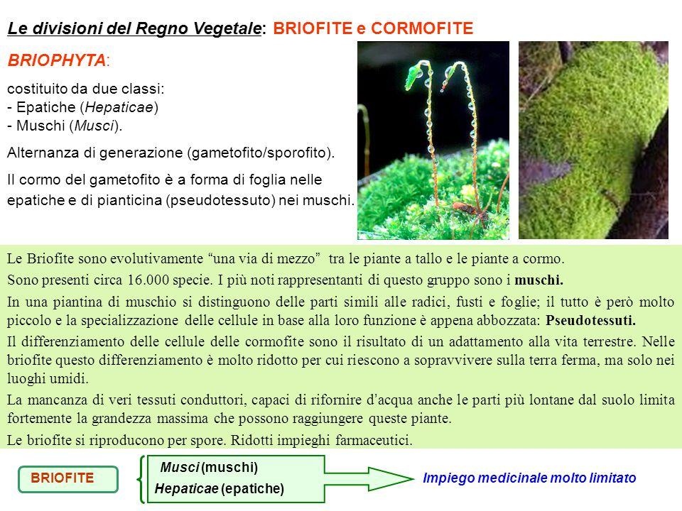 BRIOPHYTA: costituito da due classi: - Epatiche (Hepaticae) - Muschi (Musci). Alternanza di generazione (gametofito/sporofito). Il cormo del gametofit