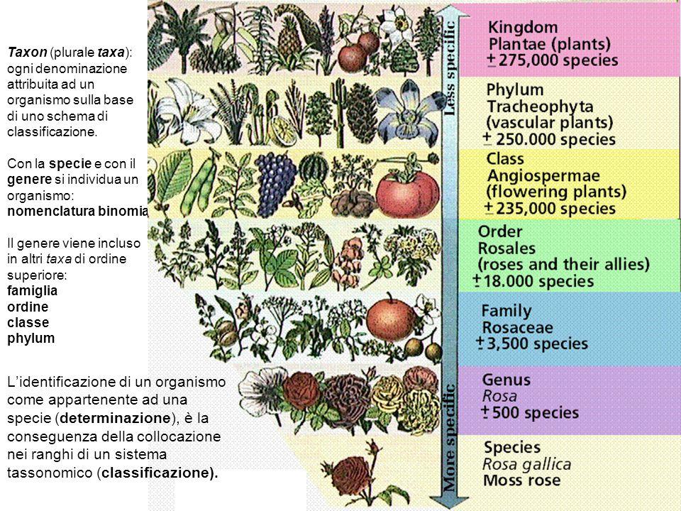 Taxon (plurale taxa): ogni denominazione attribuita ad un organismo sulla base di uno schema di classificazione. Con la specie e con il genere si indi