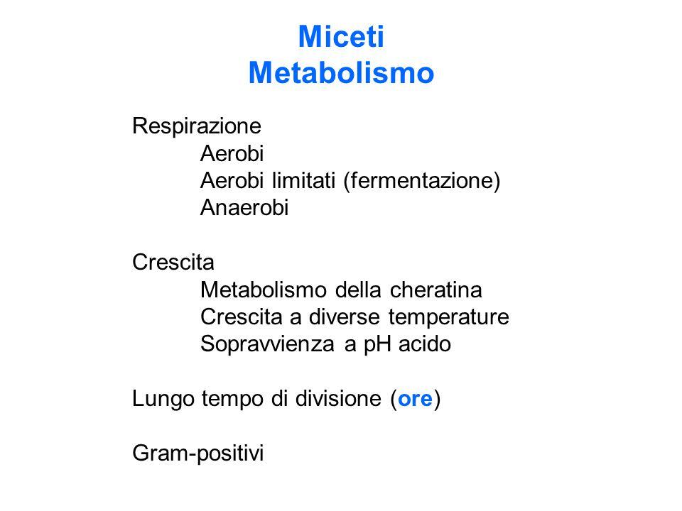 Miceti Metabolismo Respirazione Aerobi Aerobi limitati (fermentazione) Anaerobi Crescita Metabolismo della cheratina Crescita a diverse temperature Sopravvienza a pH acido Lungo tempo di divisione (ore) Gram-positivi