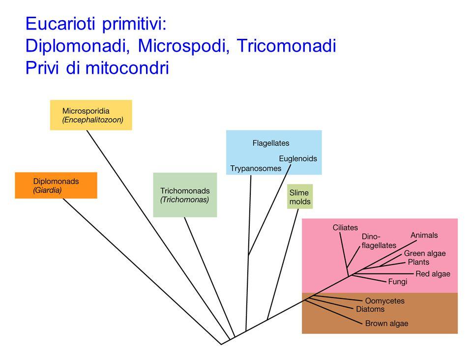 Eucarioti primitivi: Diplomonadi, Microspodi, Tricomonadi Privi di mitocondri