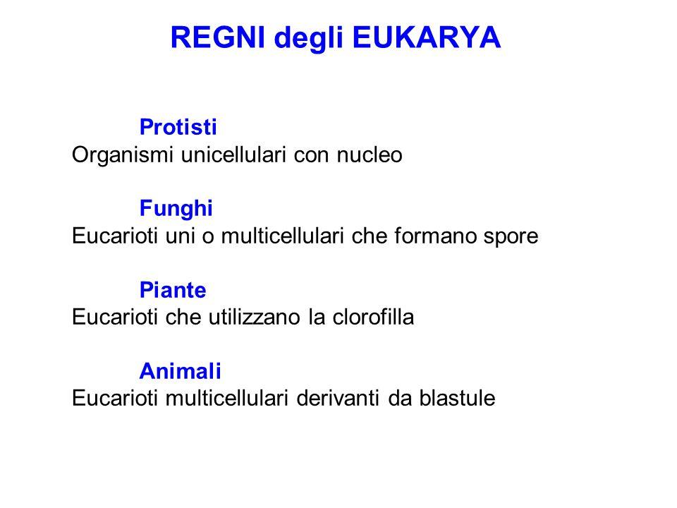 REGNI degli EUKARYA Protisti Organismi unicellulari con nucleo Funghi Eucarioti uni o multicellulari che formano spore Piante Eucarioti che utilizzano la clorofilla Animali Eucarioti multicellulari derivanti da blastule