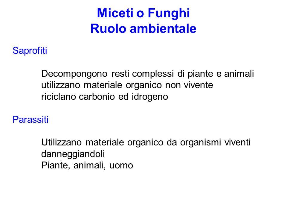 Miceti o Funghi Ruolo ambientale Saprofiti Decompongono resti complessi di piante e animali utilizzano materiale organico non vivente riciclano carbonio ed idrogeno Parassiti Utilizzano materiale organico da organismi viventi danneggiandoli Piante, animali, uomo