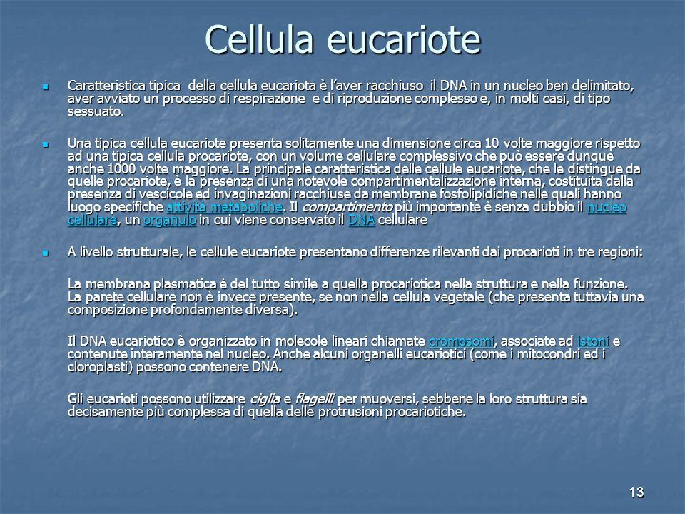 13 Cellula eucariote Caratteristica tipica della cellula eucariota è l'aver racchiuso il DNA in un nucleo ben delimitato, aver avviato un processo di respirazione e di riproduzione complesso e, in molti casi, di tipo sessuato.