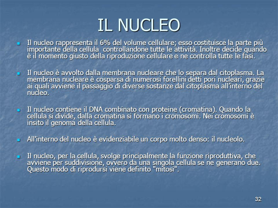 32 IL NUCLEO Il nucleo rappresenta il 6% del volume cellulare; esso costituisce la parte più importante della cellula controllandone tutte le attività.
