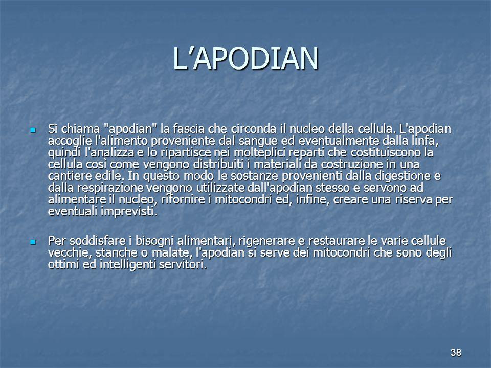38 L'APODIAN Si chiama apodian la fascia che circonda il nucleo della cellula.