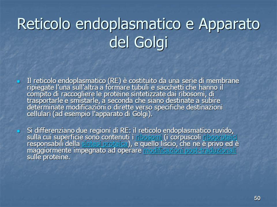 50 Reticolo endoplasmatico e Apparato del Golgi Il reticolo endoplasmatico (RE) è costituito da una serie di membrane ripiegate l'una sull'altra a for