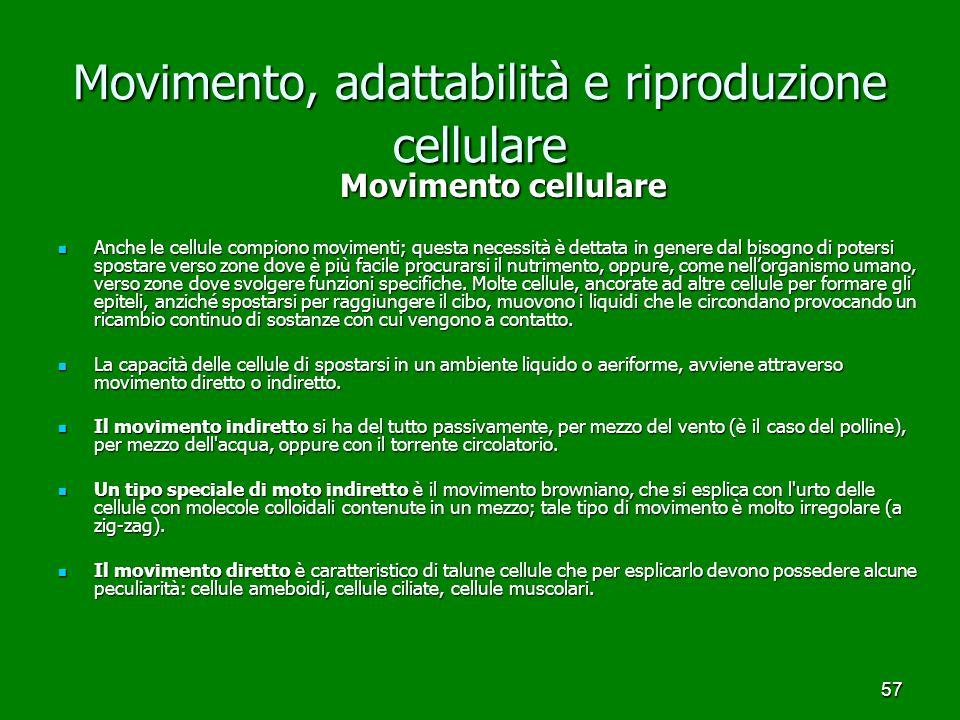 57 Movimento, adattabilità e riproduzione cellulare Movimento cellulare Movimento cellulare Anche le cellule compiono movimenti; questa necessità è de
