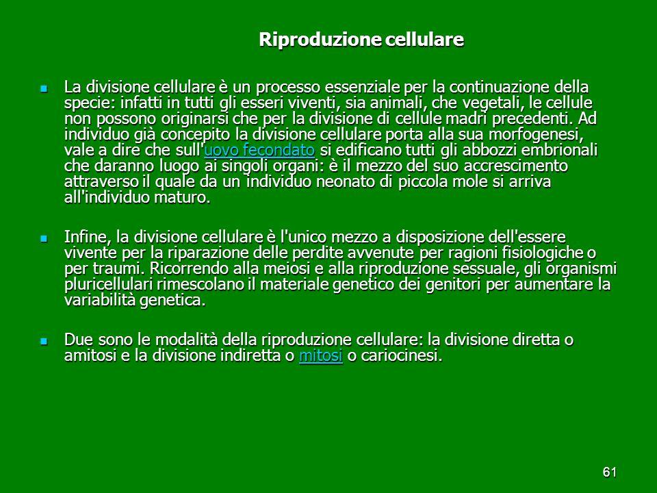61 Riproduzione cellulare Riproduzione cellulare La divisione cellulare è un processo essenziale per la continuazione della specie: infatti in tutti g