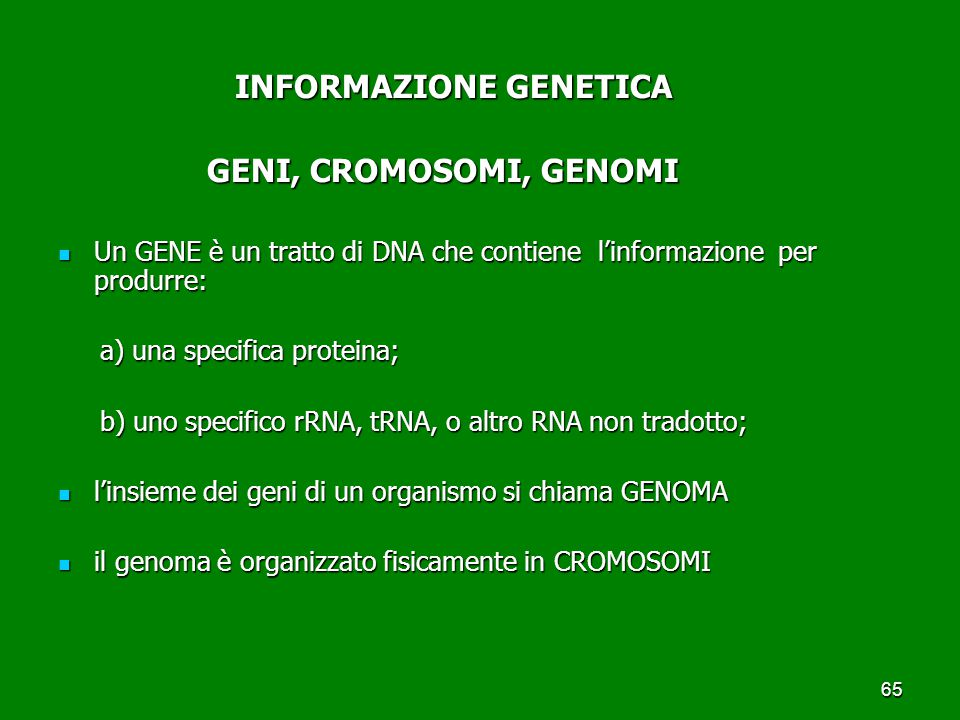 65 INFORMAZIONE GENETICA INFORMAZIONE GENETICA GENI, CROMOSOMI, GENOMI GENI, CROMOSOMI, GENOMI Un GENE è un tratto di DNA che contiene l'informazione per produrre: Un GENE è un tratto di DNA che contiene l'informazione per produrre: a) una specifica proteina; a) una specifica proteina; b) uno specifico rRNA, tRNA, o altro RNA non tradotto; b) uno specifico rRNA, tRNA, o altro RNA non tradotto; l'insieme dei geni di un organismo si chiama GENOMA l'insieme dei geni di un organismo si chiama GENOMA il genoma è organizzato fisicamente in CROMOSOMI il genoma è organizzato fisicamente in CROMOSOMI
