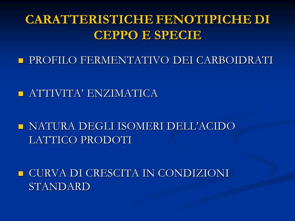 CARATTERISTICHE FENOTIPICHE DI CEPPO E SPECIE PROFILO FERMENTATIVO DEI CARBOIDRATI PROFILO FERMENTATIVO DEI CARBOIDRATI ATTIVITA' ENZIMATICA ATTIVITA' ENZIMATICA NATURA DEGLI ISOMERI DELL'ACIDO LATTICO PRODOTI NATURA DEGLI ISOMERI DELL'ACIDO LATTICO PRODOTI CURVA DI CRESCITA IN CONDIZIONI STANDARD CURVA DI CRESCITA IN CONDIZIONI STANDARD
