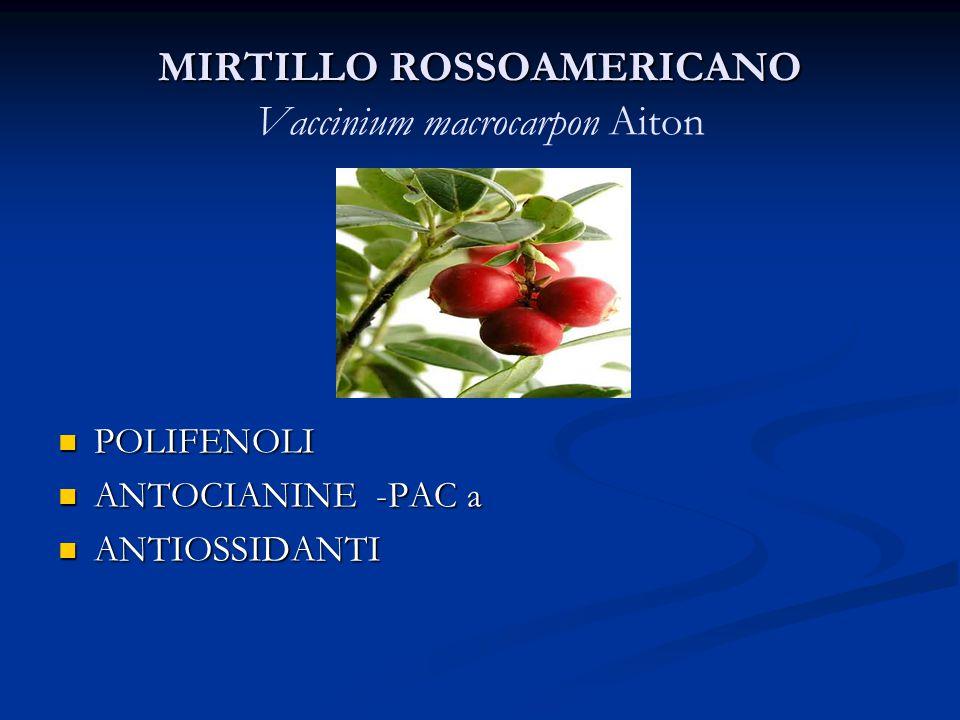 MIRTILLO ROSSOAMERICANO MIRTILLO ROSSOAMERICANO Vaccinium macrocarpon Aiton POLIFENOLI ANTOCIANINE -PAC a ANTIOSSIDANTI