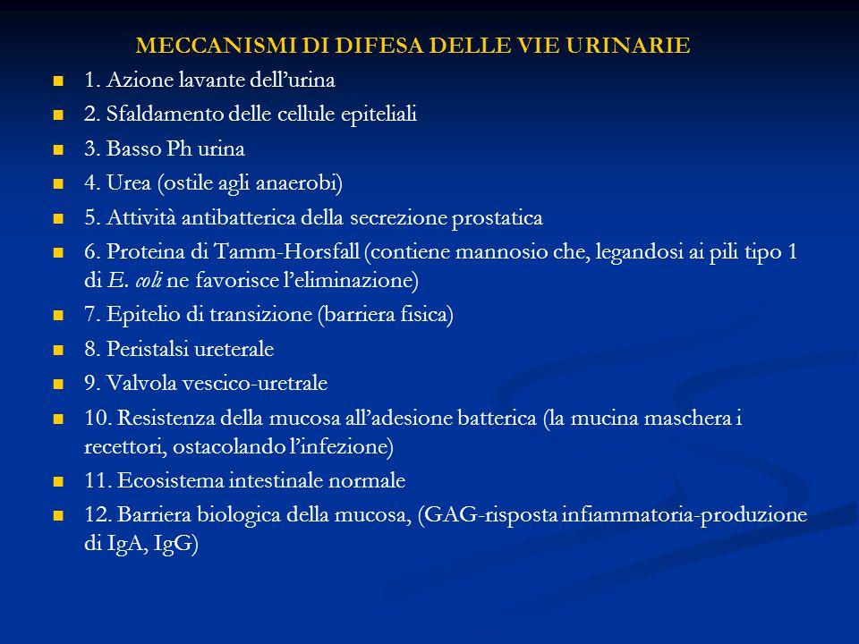 MECCANISMI DI DIFESA DELLE VIE URINARIE 1.Azione lavante dell'urina 2.