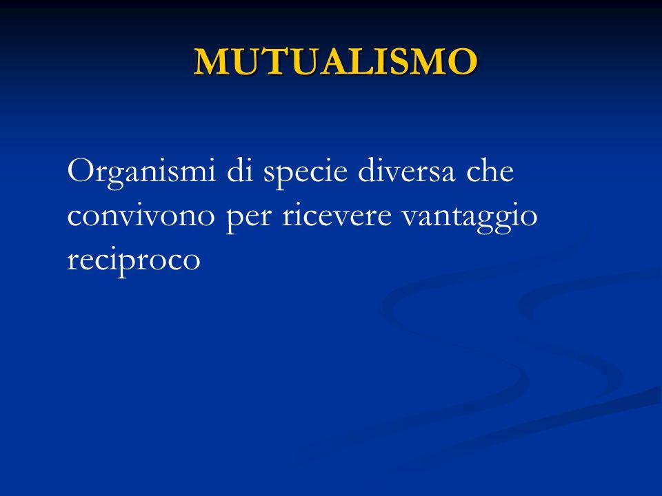 MUTUALISMO MUTUALISMO Organismi di specie diversa che convivono per ricevere vantaggio reciproco