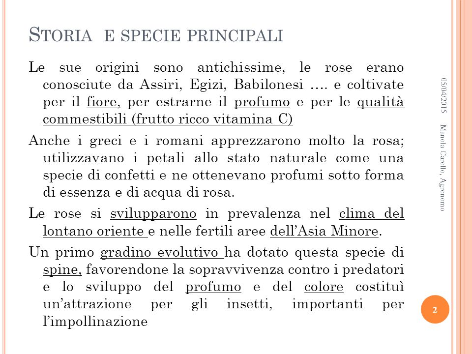 STORIA E SPECIE PRINCIPALI Le rose antiche (fioritura unica estiva) Gallica, Damascena, Alba, Centifolia e Moscata.