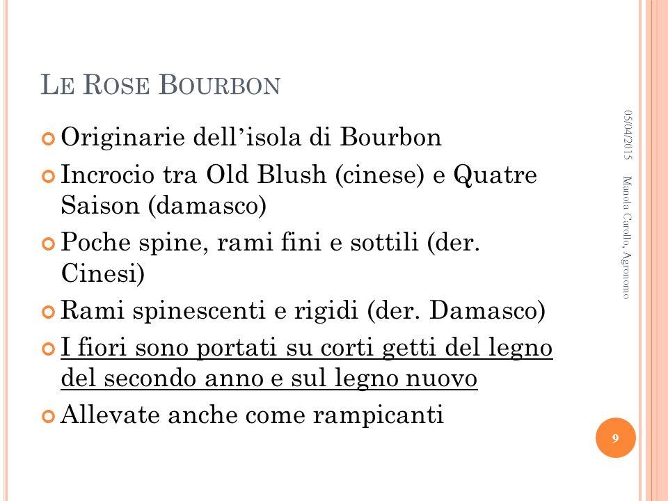 05/04/2015Manola Carollo, Agronomo 10 Souvenir de la Malmaison Variegat a di Bologna Louise Odier