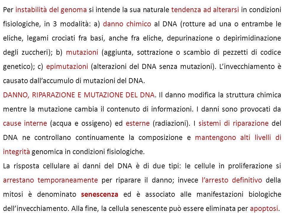 Per instabilità del genoma si intende la sua naturale tendenza ad alterarsi in condizioni fisiologiche, in 3 modalità: a) danno chimico al DNA (rottur
