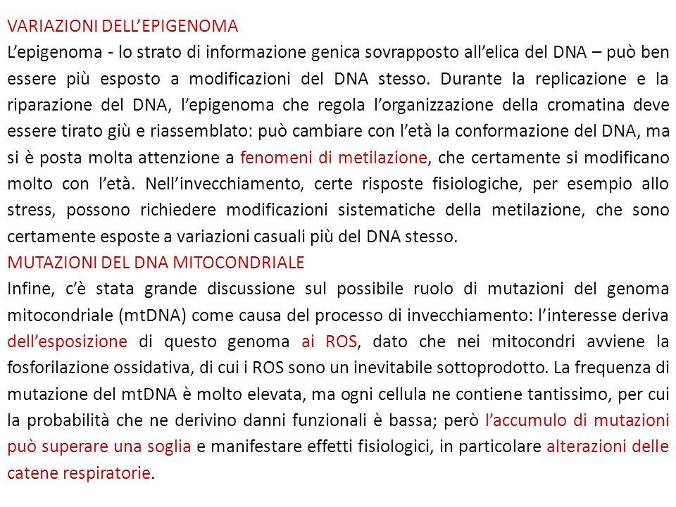 VARIAZIONI DELL'EPIGENOMA L'epigenoma - lo strato di informazione genica sovrapposto all'elica del DNA – può ben essere più esposto a modificazioni de