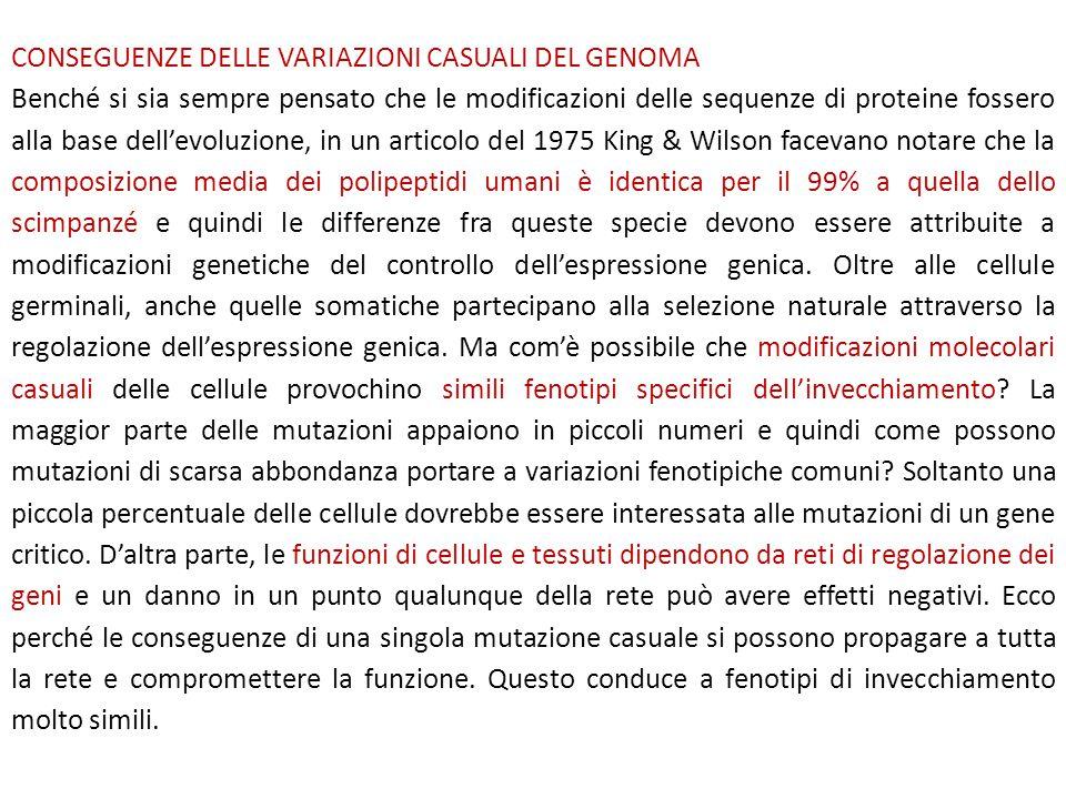 CONSEGUENZE DELLE VARIAZIONI CASUALI DEL GENOMA Benché si sia sempre pensato che le modificazioni delle sequenze di proteine fossero alla base dell'ev