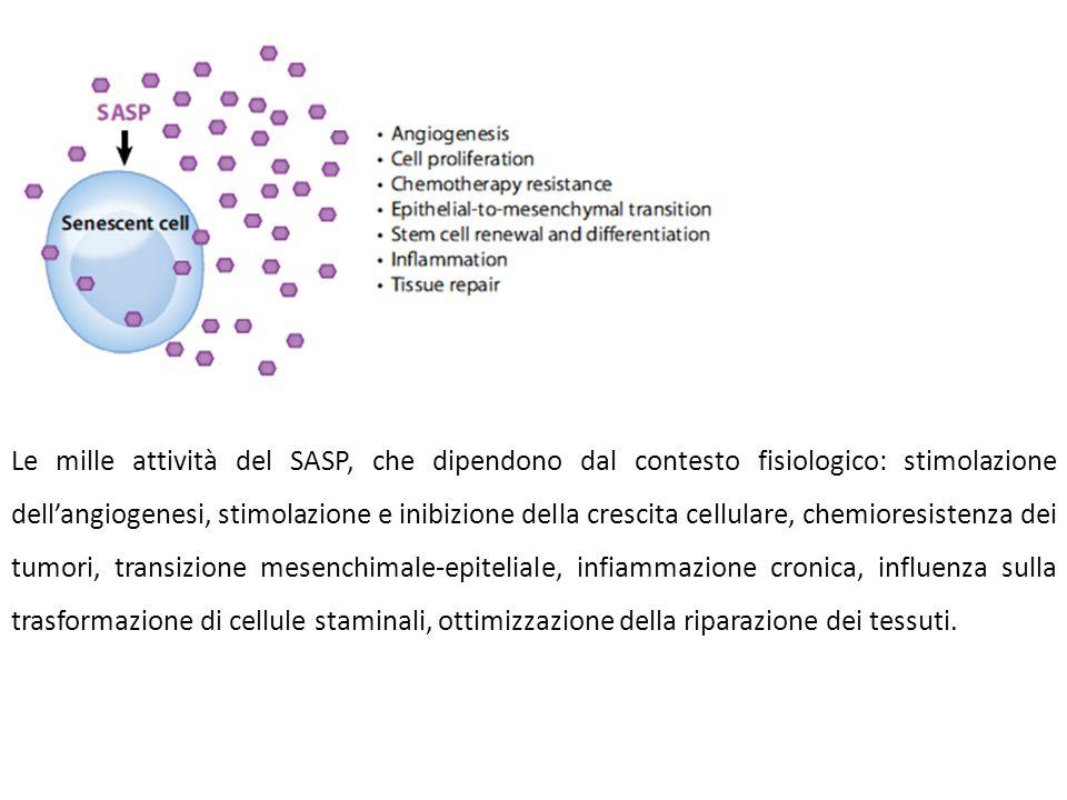 Le mille attività del SASP, che dipendono dal contesto fisiologico: stimolazione dell'angiogenesi, stimolazione e inibizione della crescita cellulare,