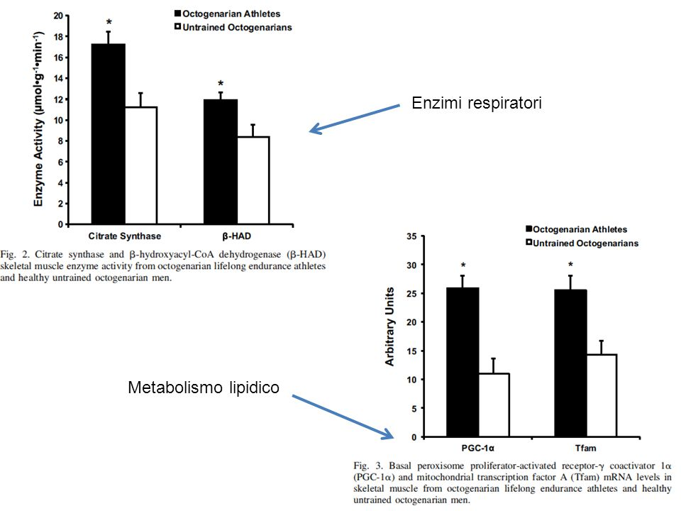 Enzimi respiratori Metabolismo lipidico