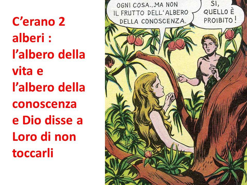 C'erano 2 alberi : l'albero della vita e l'albero della conoscenza e Dio disse a Loro di non toccarli