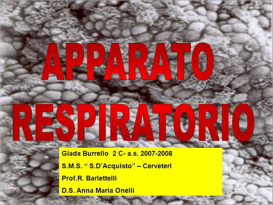 Giada Burrello 2 C- a.s.2007-2008 S.M.S. S.D'Acquisto – Cerveteri Prof.R.