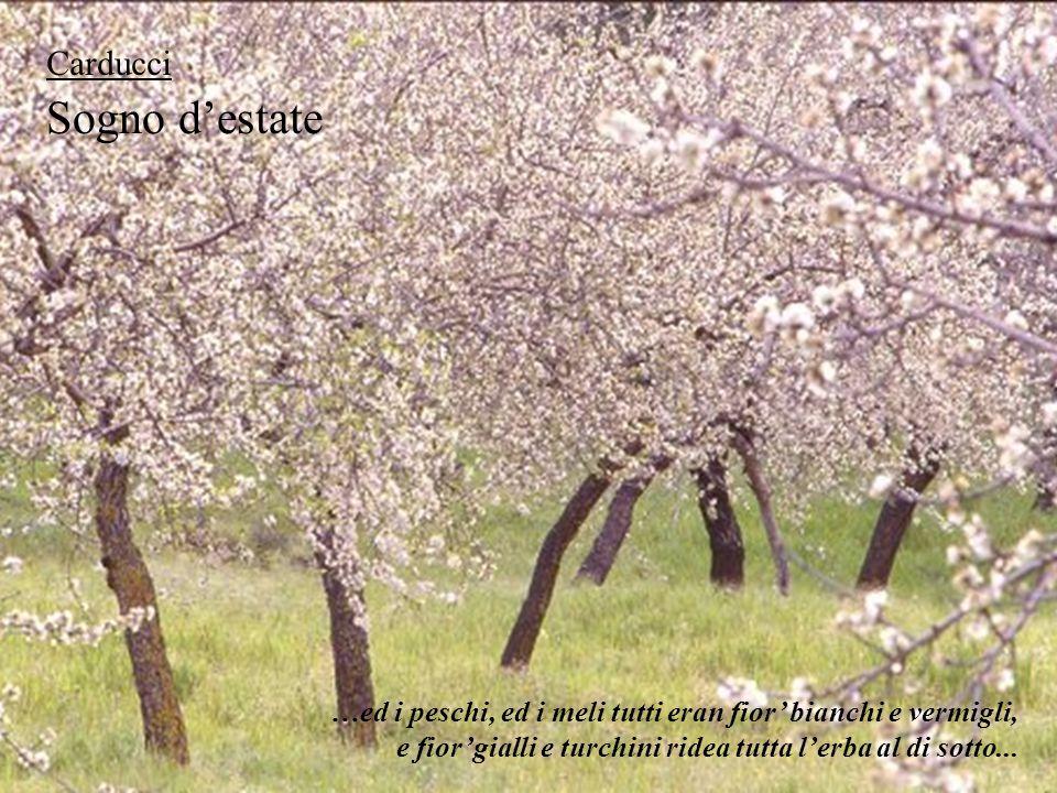 Sogno d'estate Carducci …ed i peschi, ed i meli tutti eran fior' bianchi e vermigli, e fior'gialli e turchini ridea tutta l'erba al di sotto...