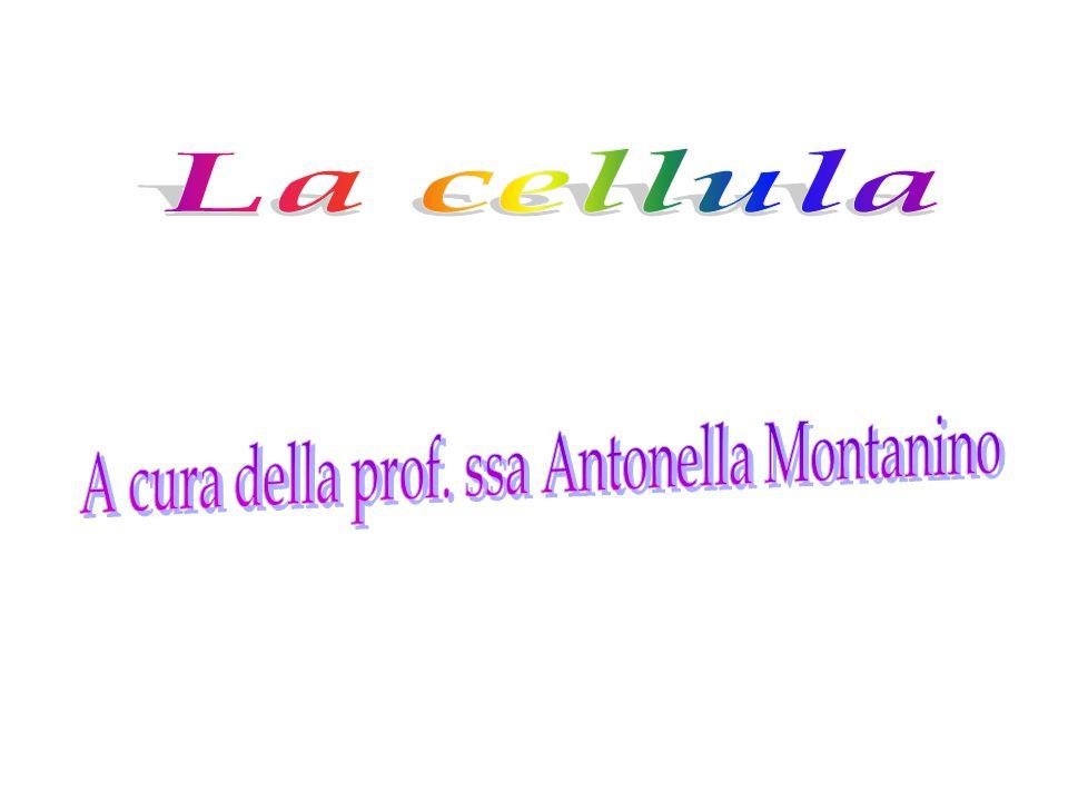 CELLULA PROCARIOTICA DEI BATTERI.
