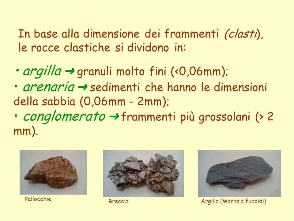 In base alla dimensione dei frammenti (clasti), le rocce clastiche si dividono in: argilla ➜ granuli molto fini ( 2 mm). Pallocchie BrecciaArgilla (Ma