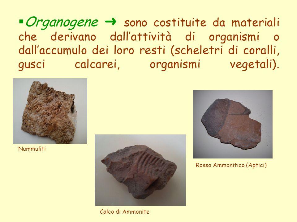  Organogene ➜ sono costituite da materiali che derivano dall'attività di organismi o dall'accumulo dei loro resti (scheletri di coralli, gusci calcar