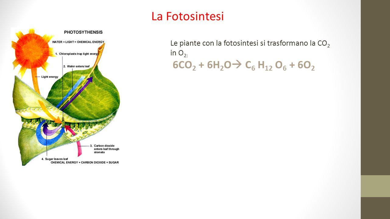 Le piante con la fotosintesi si trasformano la CO 2 in O 2: 6CO 2 + 6H 2 O  C 6 H 12 O 6 + 6O 2 La Fotosintesi