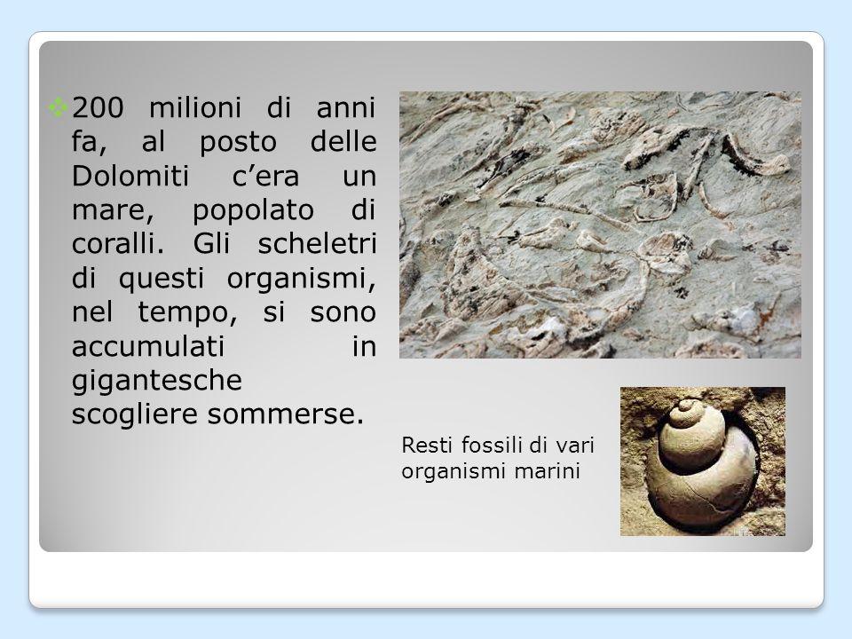  200 milioni di anni fa, al posto delle Dolomiti c'era un mare, popolato di coralli.
