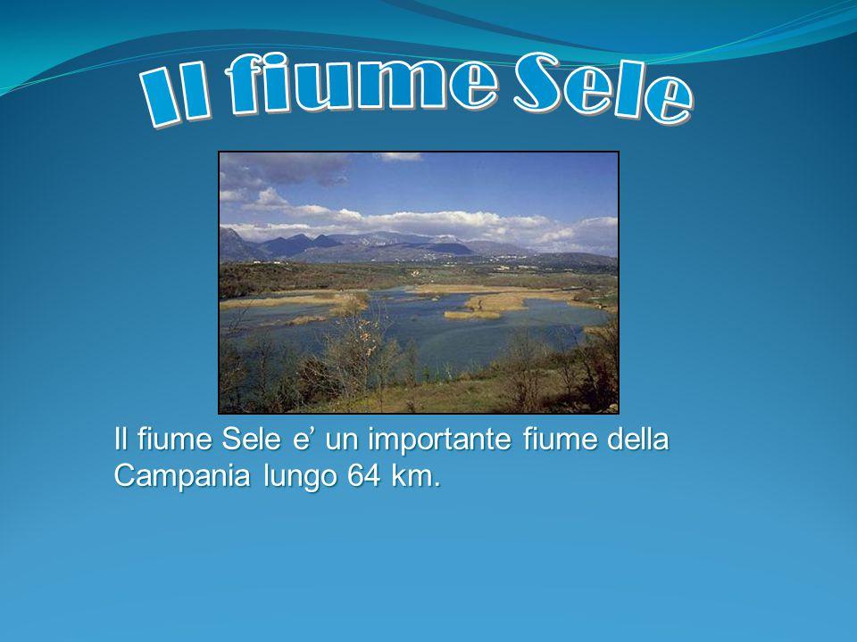 Il fiume Sele e ' un importante fiume della Campania lungo 64 km.