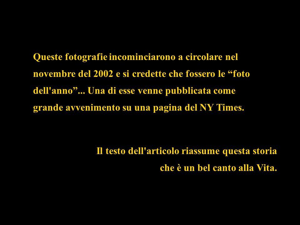 """Queste fotografie incominciarono a circolare nel novembre del 2002 e si credette che fossero le """"foto dell'anno""""... Una di esse venne pubblicata come"""
