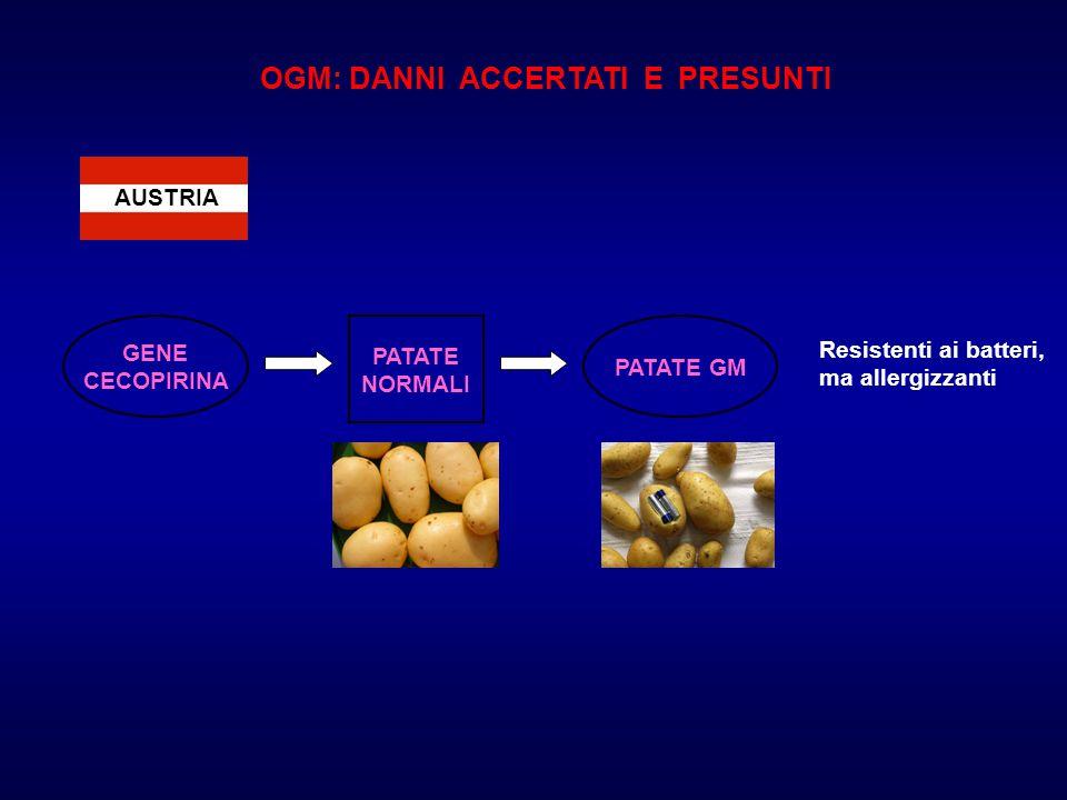 AUSTRIA OGM: DANNI ACCERTATI E PRESUNTI GENE CECOPIRINA PATATE NORMALI PATATE GM Resistenti ai batteri, ma allergizzanti