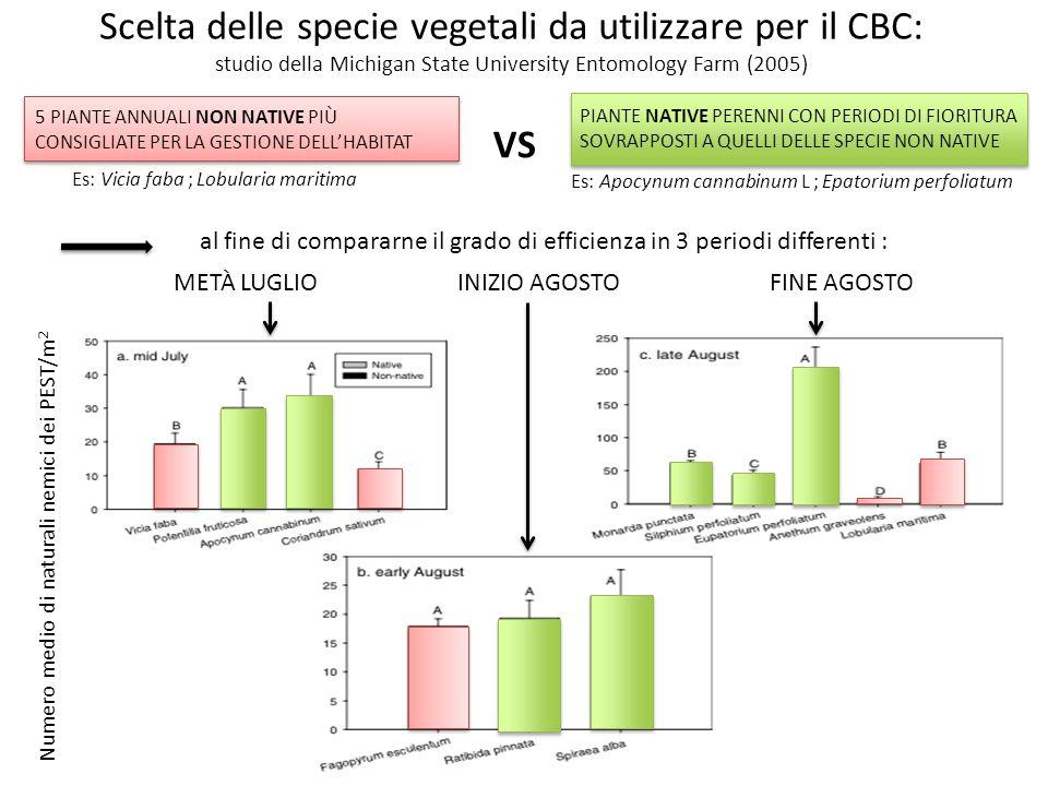 5 PIANTE ANNUALI NON NATIVE PIÙ CONSIGLIATE PER LA GESTIONE DELL'HABITAT VS PIANTE NATIVE PERENNI CON PERIODI DI FIORITURA SOVRAPPOSTI A QUELLI DELLE SPECIE NON NATIVE al fine di compararne il grado di efficienza in 3 periodi differenti : METÀ LUGLIO INIZIO AGOSTO FINE AGOSTO Scelta delle specie vegetali da utilizzare per il CBC: studio della Michigan State University Entomology Farm (2005) Numero medio di naturali nemici dei PEST/m 2 Es: Vicia faba ; Lobularia maritima Es: Apocynum cannabinum L ; Epatorium perfoliatum