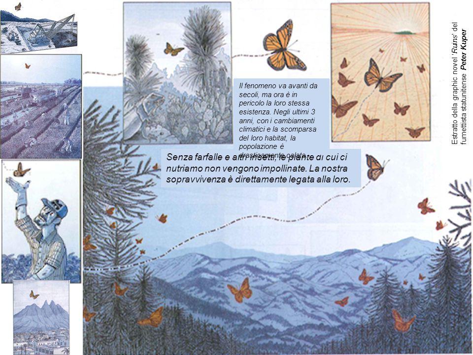 Senza farfalle e altri insetti, le piante di cui ci nutriamo non vengono impollinate.