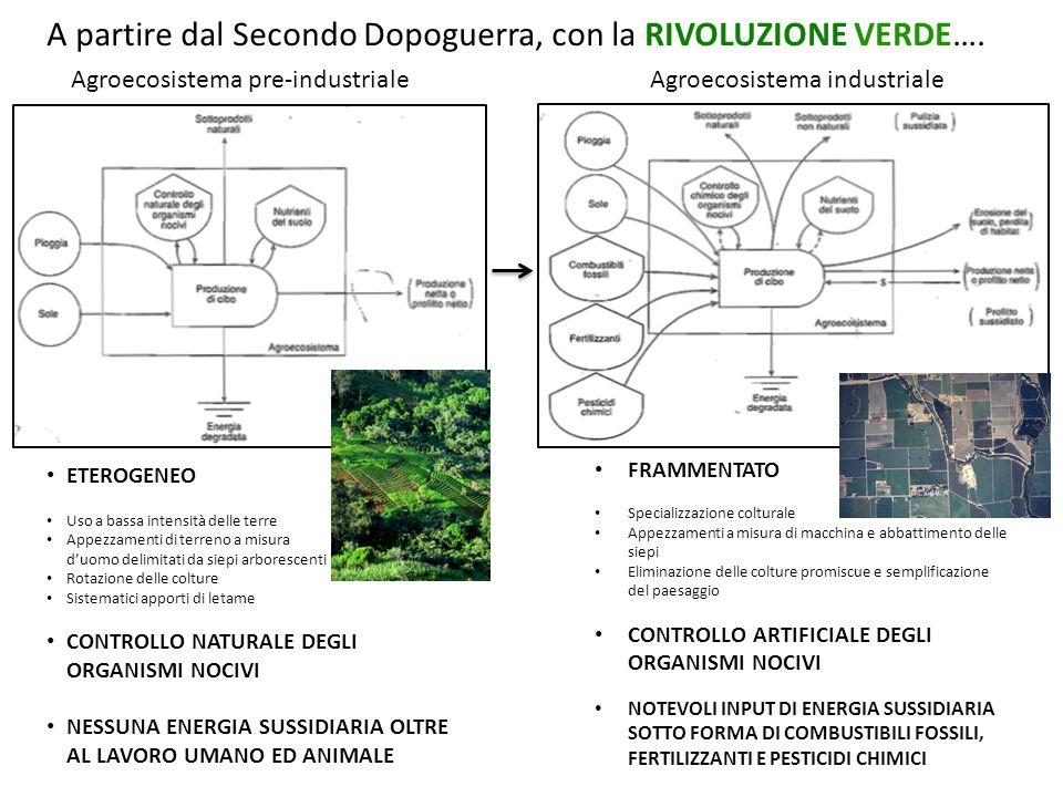 Agroecosistema pre-industriale Agroecosistema industriale ETEROGENEO Uso a bassa intensità delle terre Appezzamenti di terreno a misura d'uomo delimitati da siepi arborescenti Rotazione delle colture Sistematici apporti di letame CONTROLLO NATURALE DEGLI ORGANISMI NOCIVI NESSUNA ENERGIA SUSSIDIARIA OLTRE AL LAVORO UMANO ED ANIMALE FRAMMENTATO Specializzazione colturale Appezzamenti a misura di macchina e abbattimento delle siepi Eliminazione delle colture promiscue e semplificazione del paesaggio CONTROLLO ARTIFICIALE DEGLI ORGANISMI NOCIVI NOTEVOLI INPUT DI ENERGIA SUSSIDIARIA SOTTO FORMA DI COMBUSTIBILI FOSSILI, FERTILIZZANTI E PESTICIDI CHIMICI A partire dal Secondo Dopoguerra, con la RIVOLUZIONE VERDE….